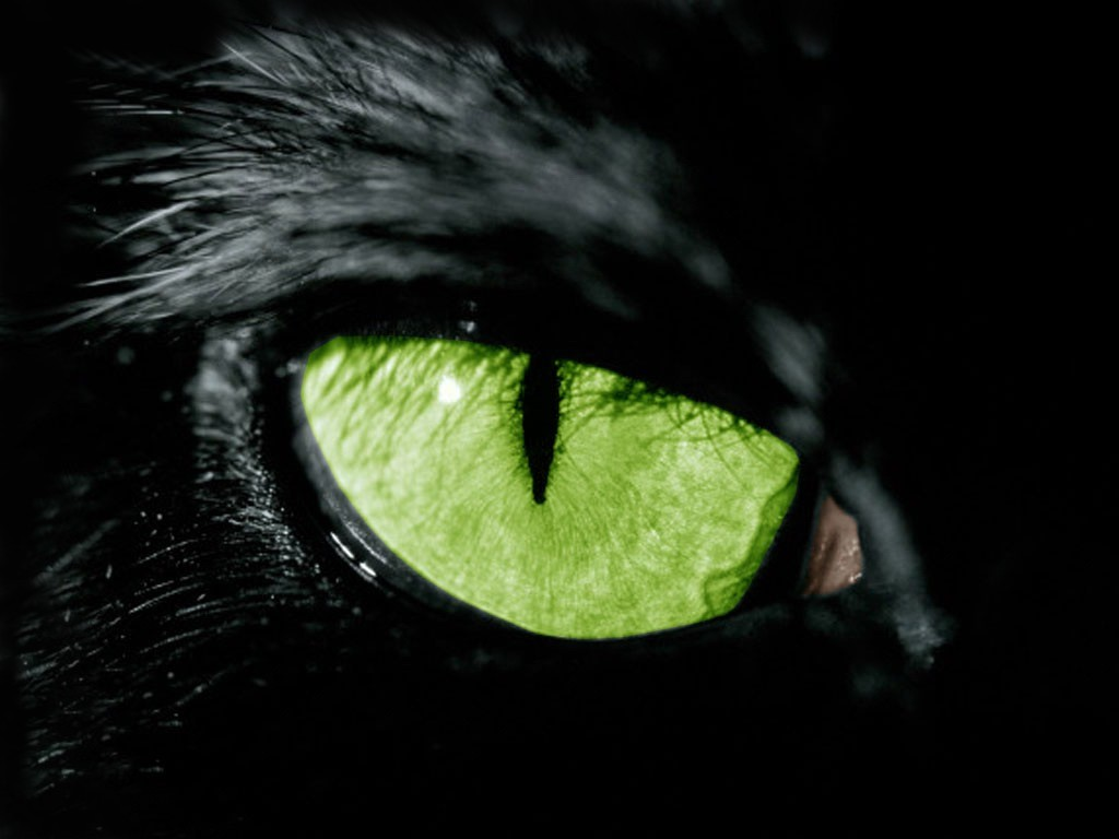 Chat Noir: Lyrical Invasion Vol.3